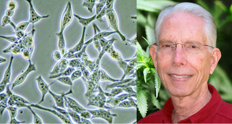 Former Cancer Researcher Chooses Cannabis Over Chemotherapy, Cures His Prostate Cancer Dennis-hill-prostate-cancer